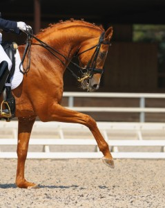 equestrian-accident